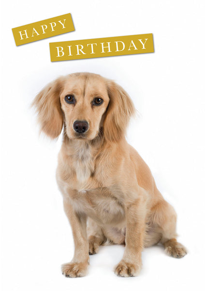 Lemon Cocker Spaniel Birthday Greeting Card. Large A5 size with envelope. Blank on the inside.