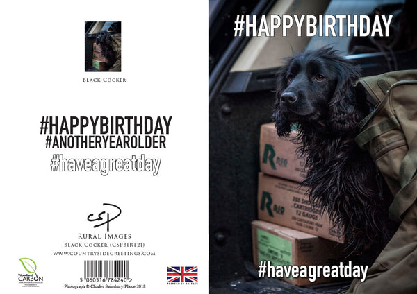 Black Cocker Spaniel Birthday Card by Charles Sainsbury-Plaice