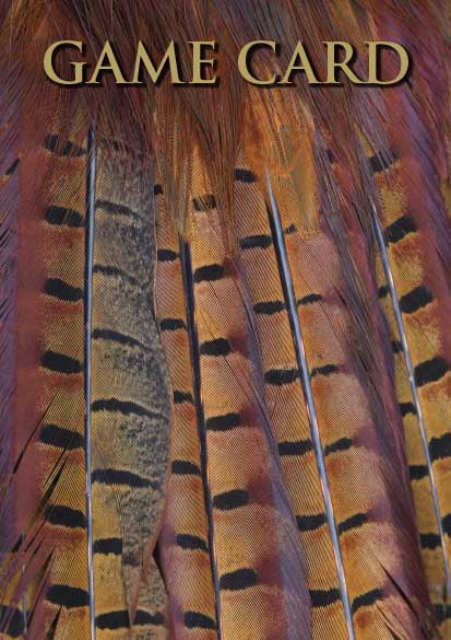 Shoot Game Cards. Pheasant Tail Feathers by Charles Sainsbury-Plaice