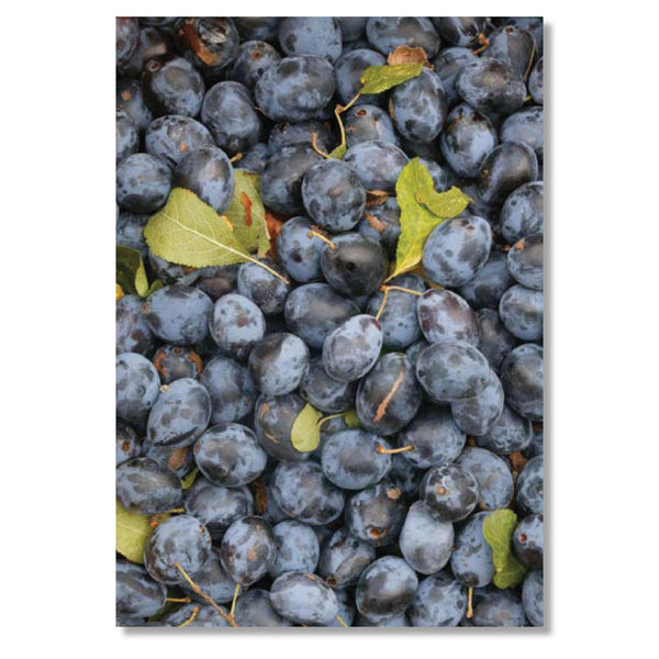Gardening Greeting Card. Damsons by Charles Sainsbury-Plaice