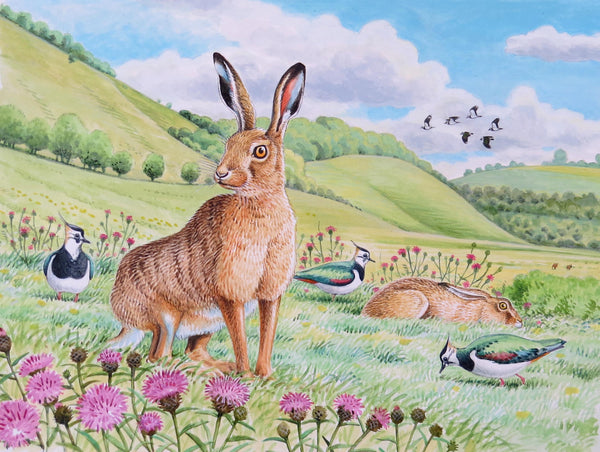 Hare wildlife, nature, greeting card by David Thelwell