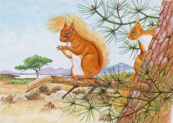 Red Squirrel greeting card by David Thelwell