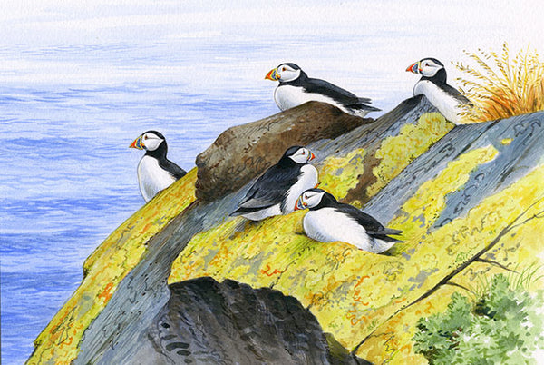 Puffins greeting card by David Thelwell
