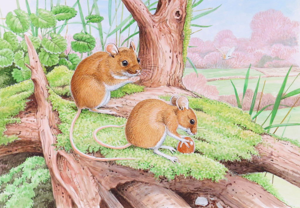 Field mice nature greeting or birthday card by David Thelwell