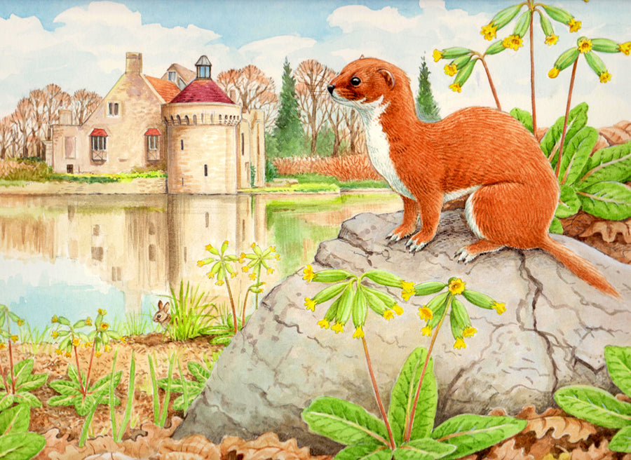 Weasel wildlife, nature, greeting card by David Thelwell