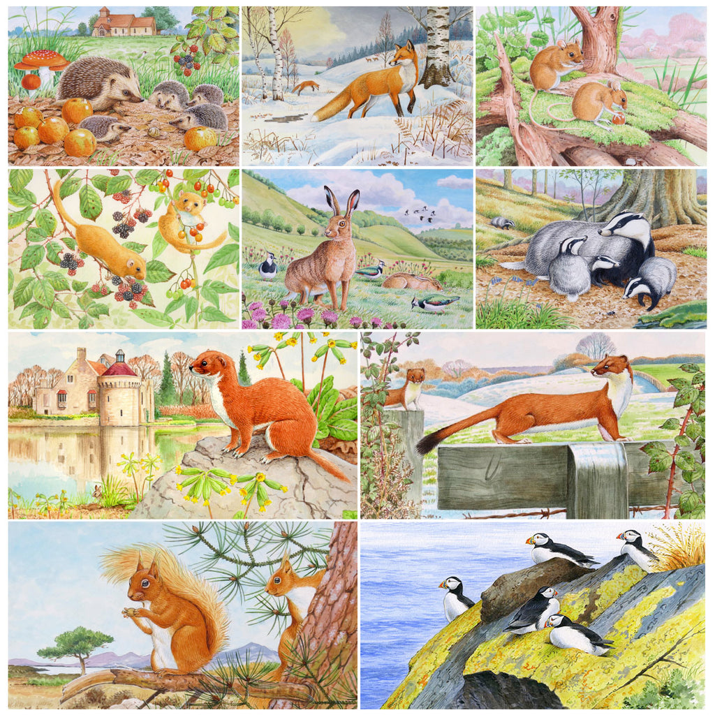 Assorted British wildlife greeting card multipack by David Thelwell