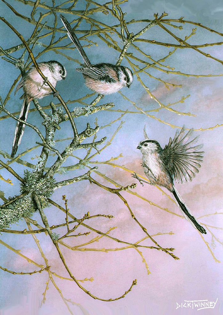 Bird greeting card. Long-tailed Tits by Dick Twinney
