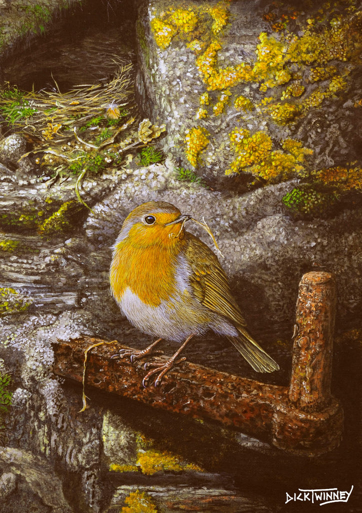 Bird greeting card. Robin at Home by Dick Twinney