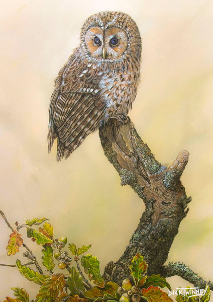 Bird greeting card. Tawny Owl and Autumn Oak by Dick Twinney