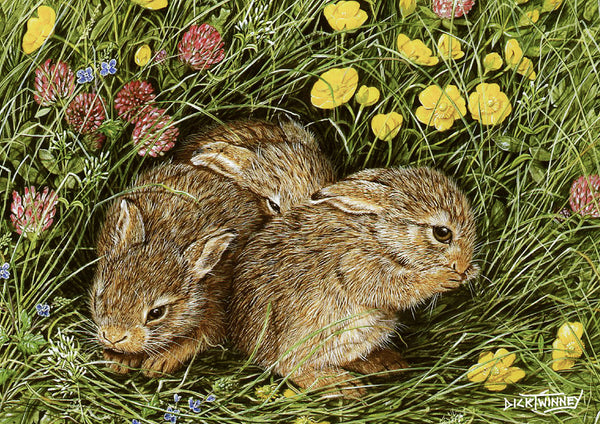 Wildlife greeting card. Leverets by Dick Twinney