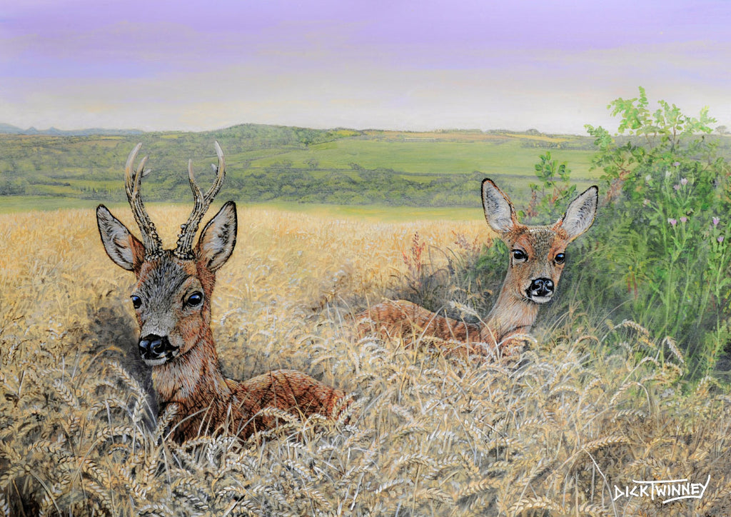 Wildlife greeting card. Roe Deer by Dick Twinney