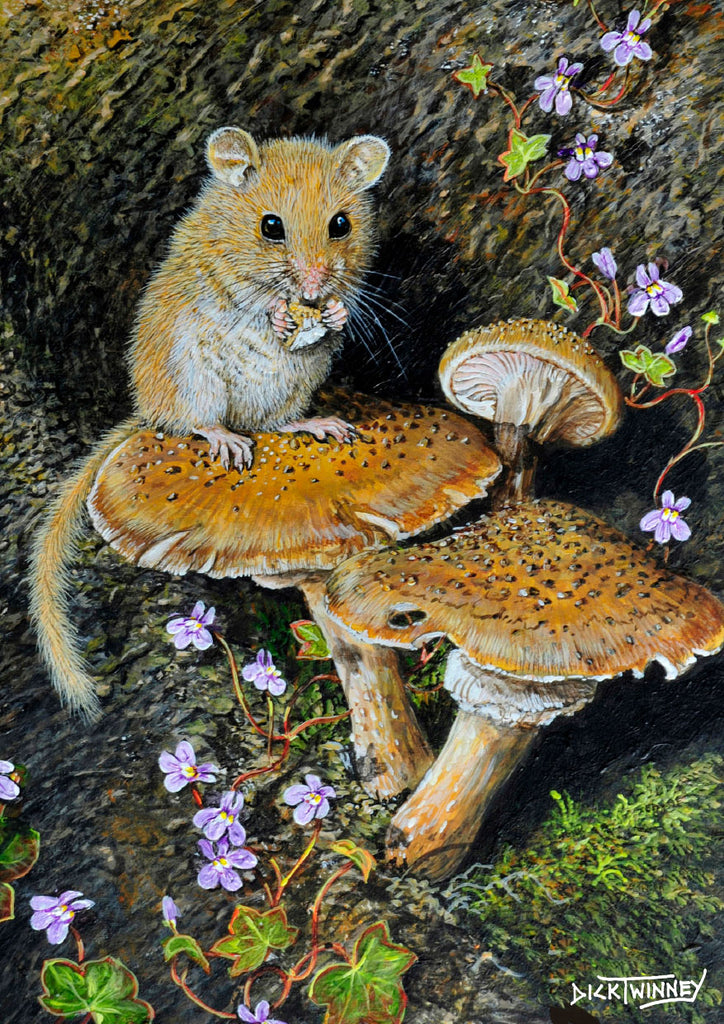 Wildlife greeting card. Dormouse by Dick Twinney