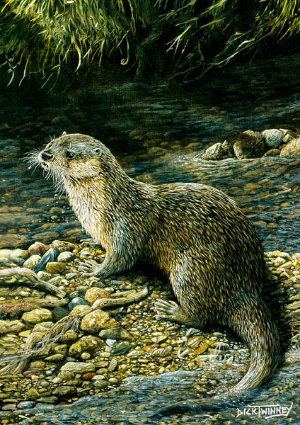 Wildlife greeting card. Otter by Dick Twinney