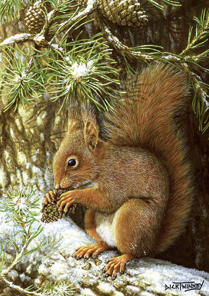 Wildlife greeting card. Red Squirrel by Dick Twinney