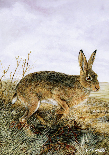 Wildlife greeting card. Brown Hare by Dick Twinney