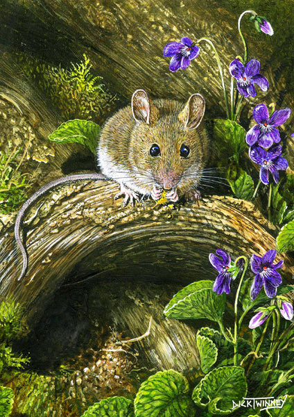 Wildlife greeting card. Wood Mouse by Dick Twinney