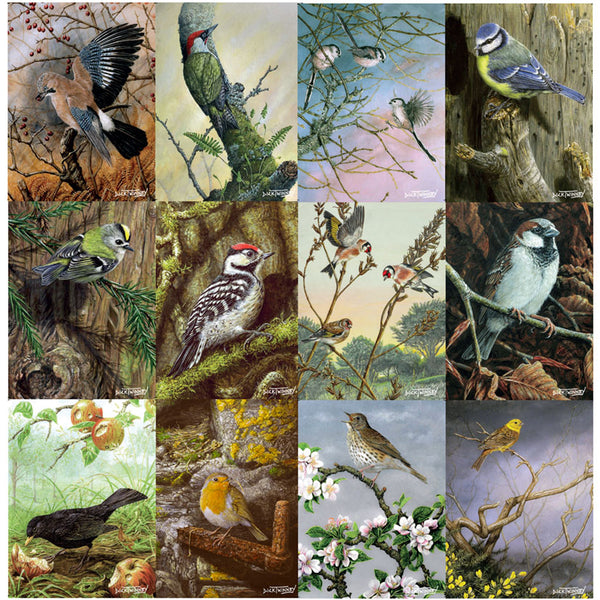 12 British Birds Notecards by Dick Twinney