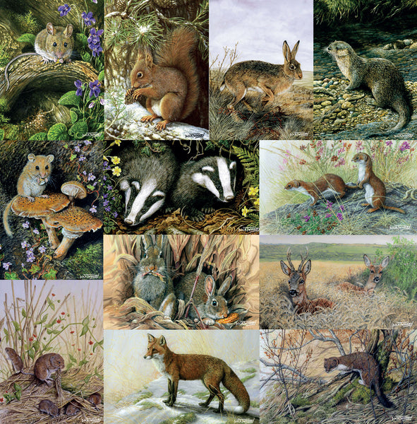 Nature and wildlife greeting card assorted multipack