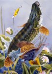 Pike freshwater fish greeting card by M J Pledger