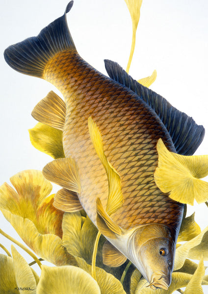 Common Carp freshwater fish greeting card