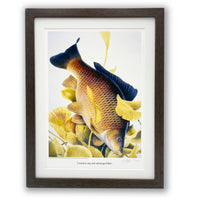 Carp fishing print by M J Pledger