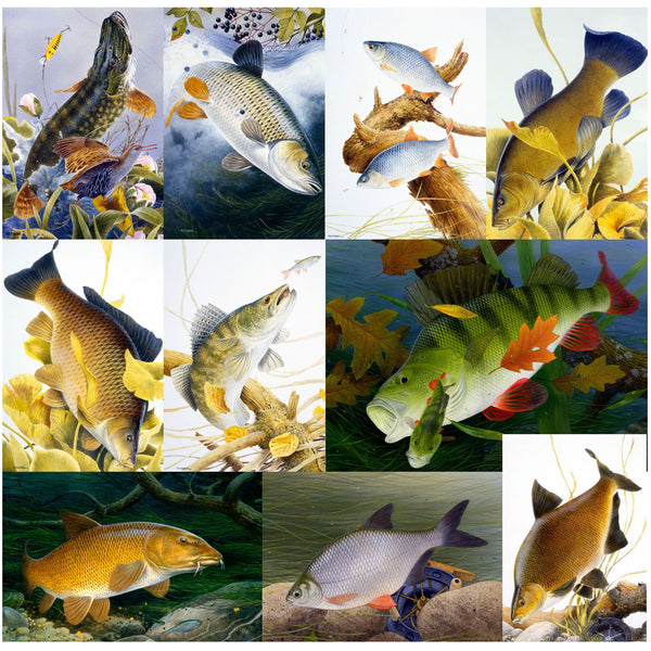 10 British freshwater fish notecards by M J Pledger