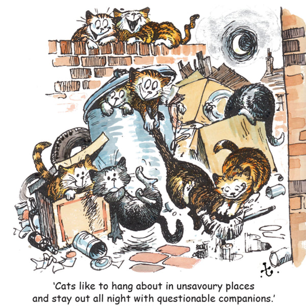 "Thelwell Cat Greeting Card ""Alley Cats"""