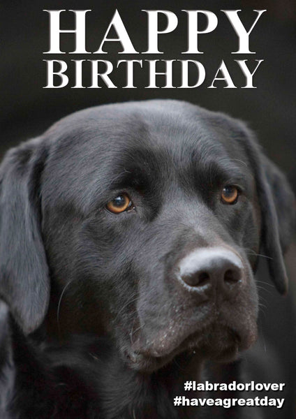 Labrador Birthday Card by Charles Sainsbury-Plaice