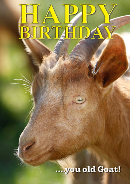 Goat Birthday Card by Charles Sainsbury-Plaice