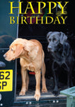 Labradors birthday card. Fox red and black labrador by Charles Sainsbury-Plaice