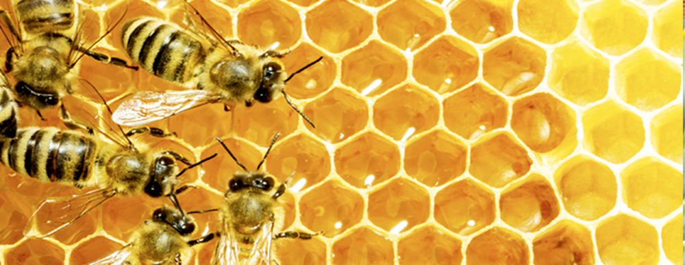 Forget about honey, THIS is the good stuff bees are getting…