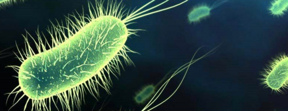 Modern Food System Creating Unbeatable Army Of Superbugs