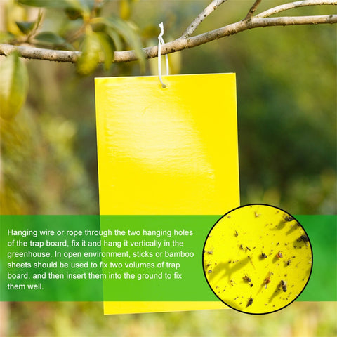Image of Double-Sided Sticky Pest Trap