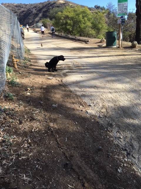 Pups of Runyon Canyon (I Love My Dogs)