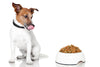 Everything You Should Know About A Dog's Digestive System