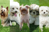 The Ultimate Guide to Hypoallergenic Dog Breeds