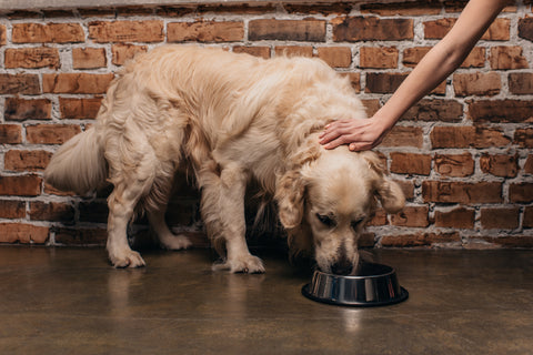Best Dog Food For Digestive Problems & How to Help A Constipated Dog