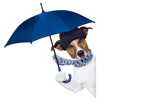 Dog Thunderstorm Anxiety - CBD For Dogs and Thunderstorm Jackets