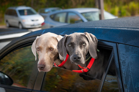 Taking a Road Trip With Pets - Traveling with Pets