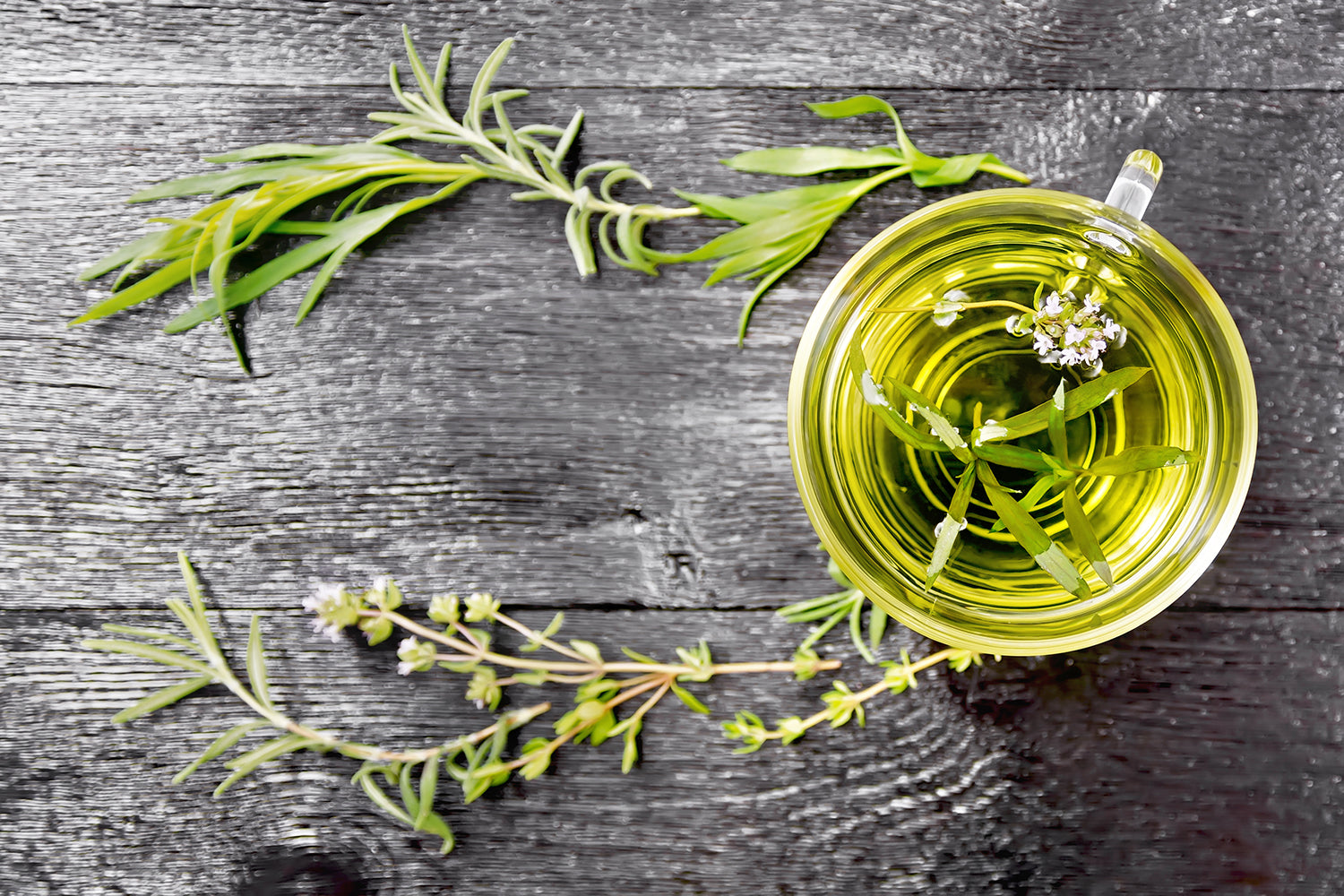 Thyme: Great Things to Know About It