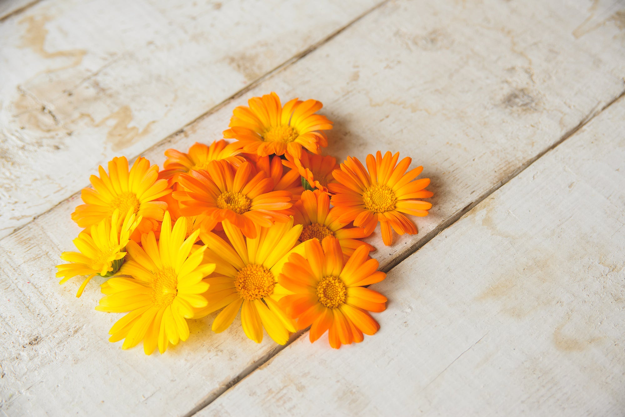calendula flowers kuker shop