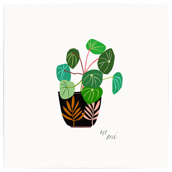 Chinese Money Plant Art Print - Limited Edition