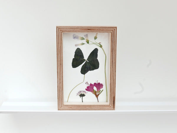 Pressed Flowers in birch ply frame - Oxalis and Dianthus