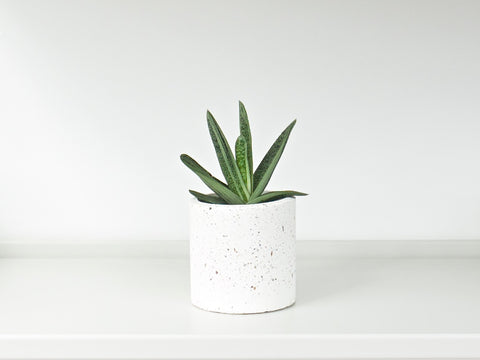 Concrete Planter - Medium
