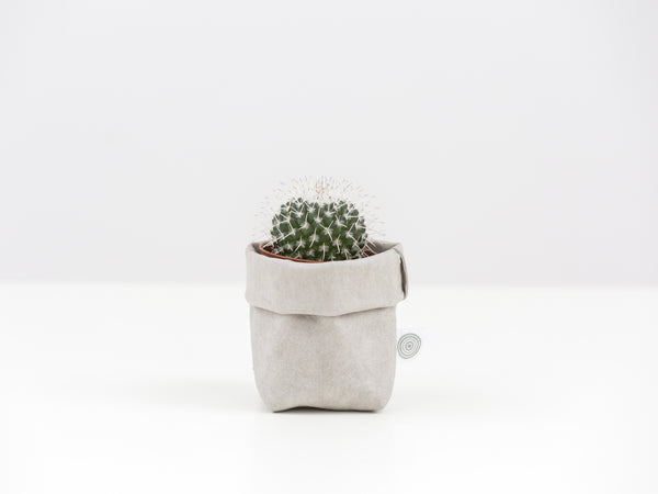 Cactus Mini with Sack