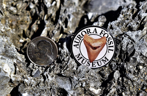 Aurora Fossil Museum pin