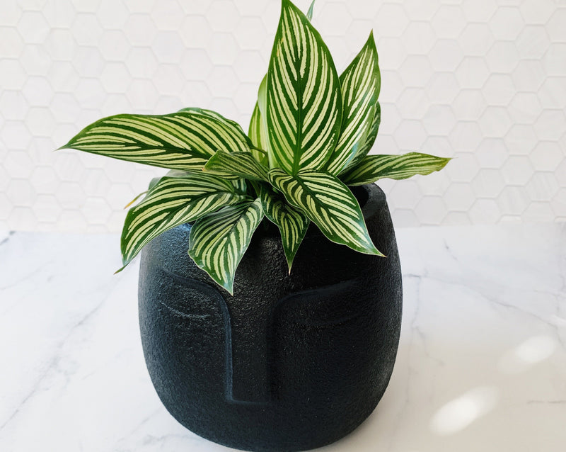 Face Planter in Matte Black