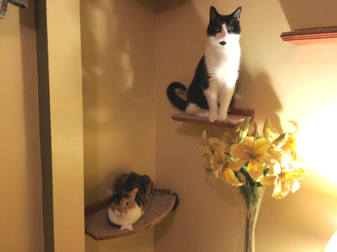 floating curved cat perchshelf with 3 steps and hidden brackets