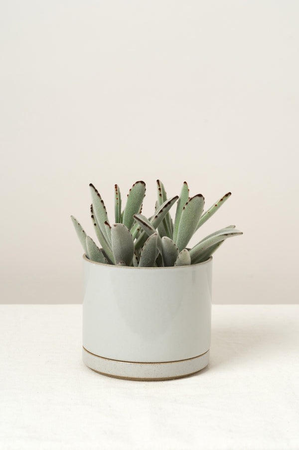 Hasami Porcelain Planter In Gloss Gray