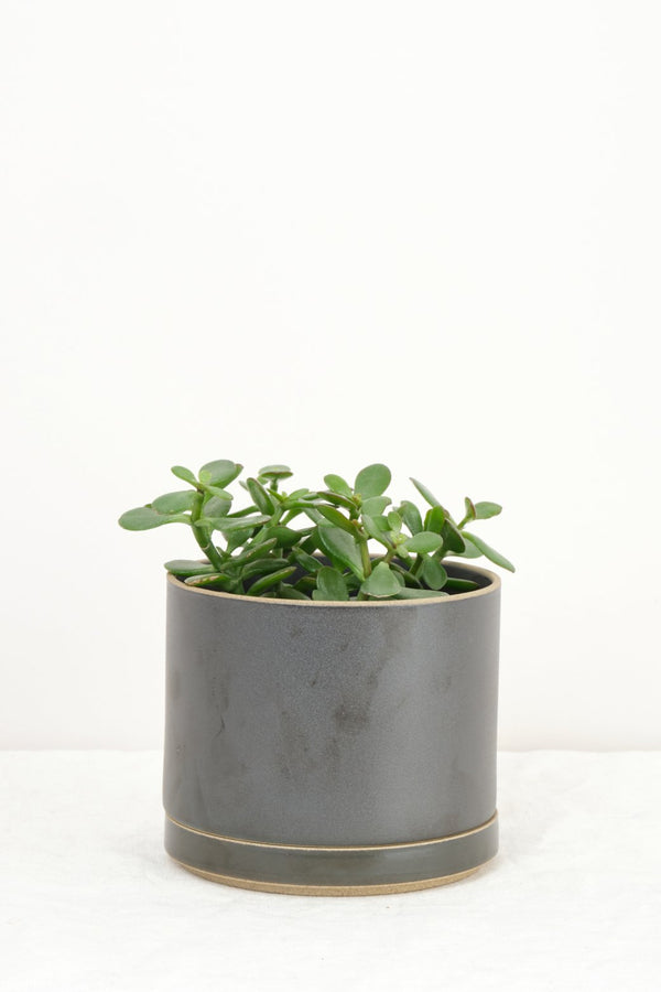 Hasami Porcelain Large Planter In Black